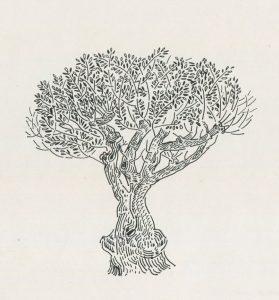Ελαιόδεντρο (Κρήτη), 1978, μελάνι σε χαρτί, 40 x 29,3 εκ., ιδιωτική συλλογή